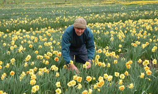Ian Riddell and daffodils pic