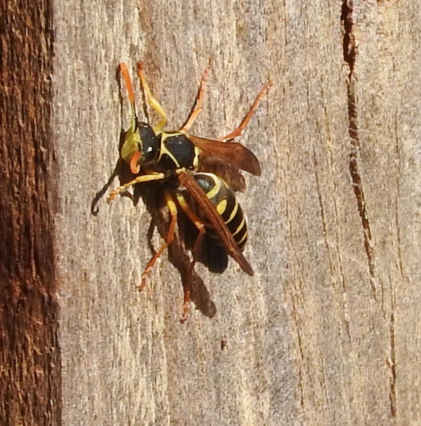 Danger Wasps Abound Number 8 Network