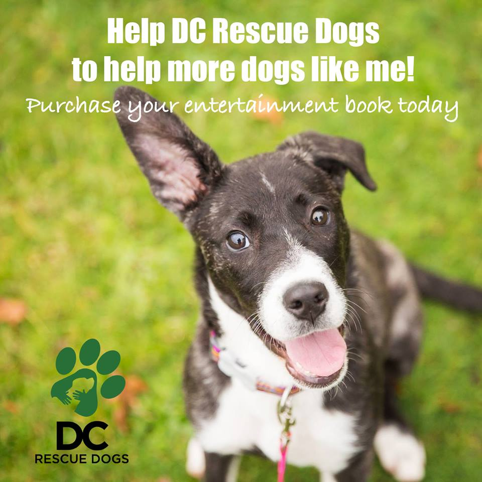DC Rescue Dogs