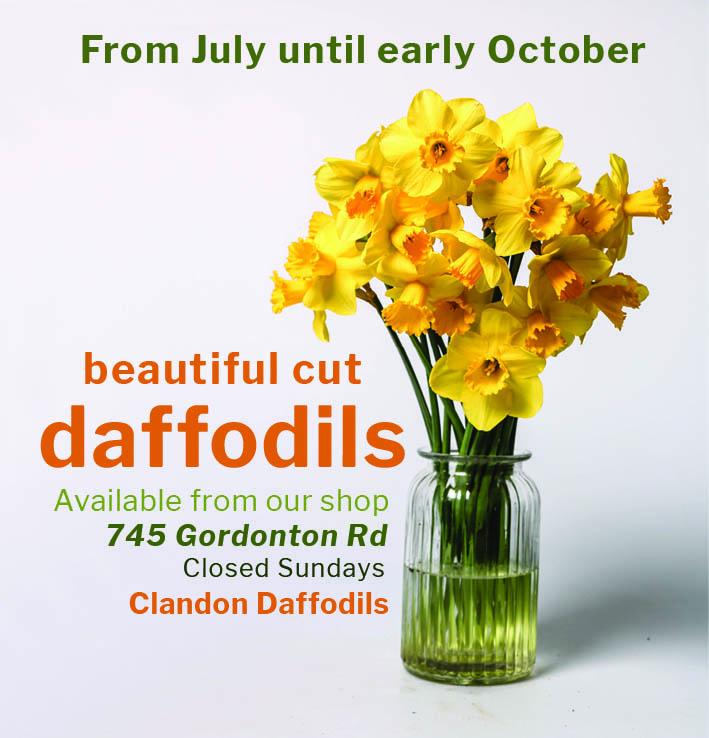 Clandon Daffodil